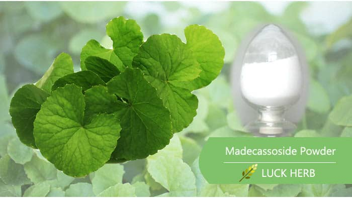 luckherb madecassoside powder