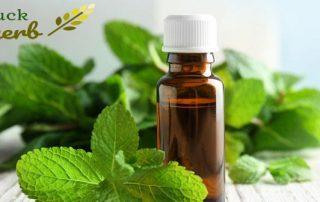 LuckHerb peppermint oil
