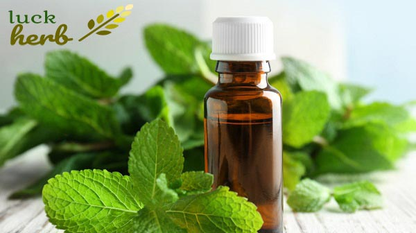 LuckHerb peppermint oil