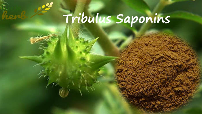 tribulus extract powder