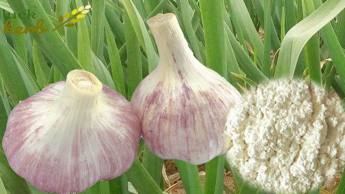 luckherb garlic extract allicin powder