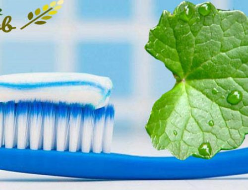 The application of gotu kola extract using in toothpaste