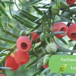 luckherb paclitaxel powder
