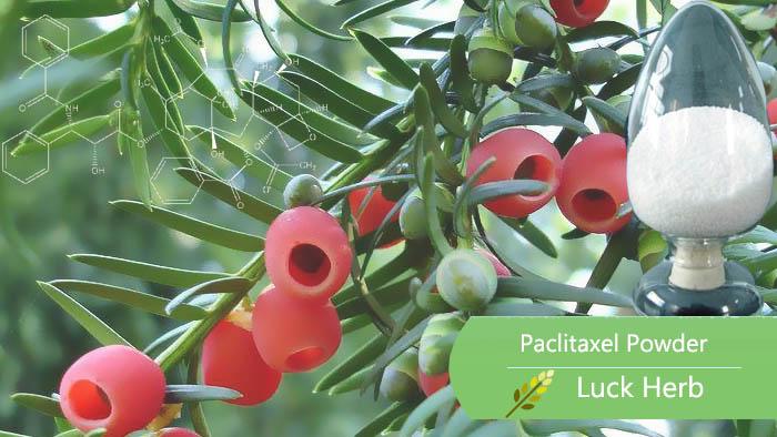 luckherb paclitaxel powder