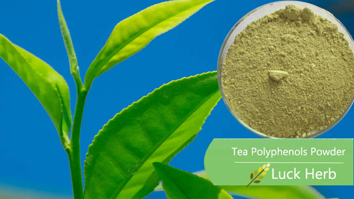 luckherb green tea Polyphenols