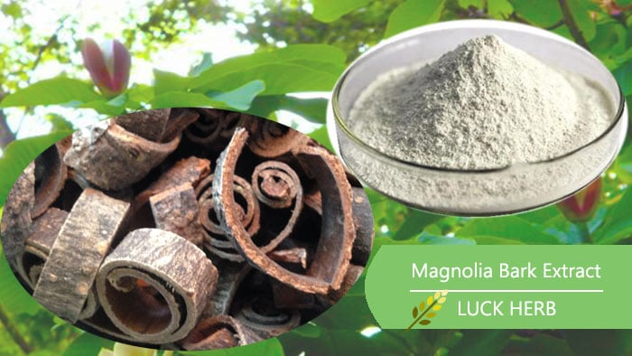 luckherb magnolia bark extract